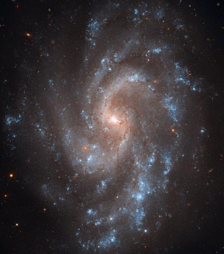 NGC 5584 hehuttelee suuria määriä nuoria, kirkkaita sinisiä tähtiä repaleisissa spiraalihaaroissaan. Spiraalihaarojen välissä on enemmän vanhempia, keltaisia tähtiä. Repaleisia spiraaleja vaikuttaa syntyvän esimerkiksi silloin, kun galaksia ympäröivän pimeän aineen pilvi on hyvin massiivinen suhteessa galaksin kiekon (näkyvän aineen) massaan. Kuva Nasa / ESA / A. Riess (STScI/JHU) / L. Macri (Texas A & M University) / The Hubble Heritage Team (STScI/AURA)