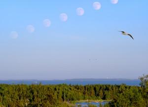 Kuu nousee päivätaivaalle Inkoossa 14.6.2014. Kuva: Kari Kalervo.