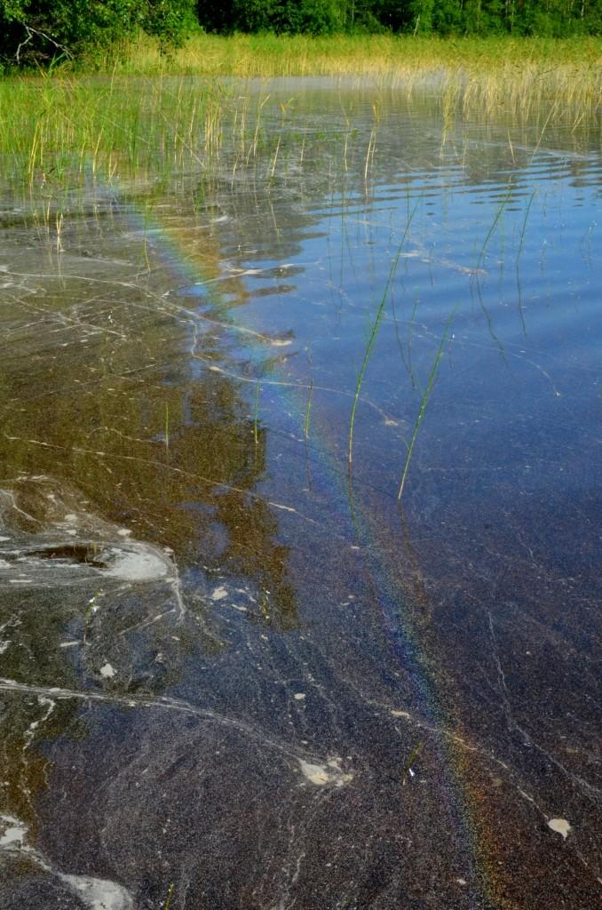 Järven pinnalle muodostunut kastekaari. Kuva: Arja Siikström.
