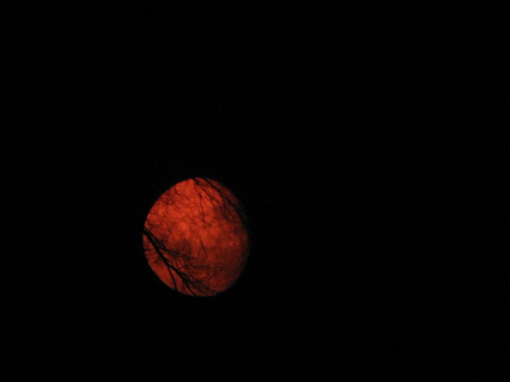 Kuva 7. Reguluksen peittyminen 30.3.2007 tuotti tulokseksi mm. kuvan kaukaisen lehdettömän puun oksistoon laskeneesta Kuusta. Parissa valokuvassa näkyy myös Regulus.